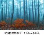 magical foggy seasonal forest... | Shutterstock . vector #542125318