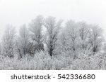 snowy forest   Shutterstock . vector #542336680