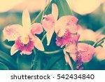 flower with vintage filter. | Shutterstock . vector #542434840