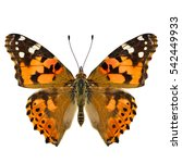 Stock photo painted lady vanessa cardui beautiful orange and brown butterfly lower wings in natural color 542449933