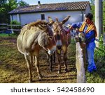 Small photo of a man fondling two donkeys in a fence
