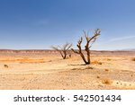 Dry Trees Plant In Desert...