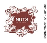 nuts silhouette banner...   Shutterstock .eps vector #542504980