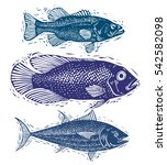 set of fishes  different... | Shutterstock . vector #542582098