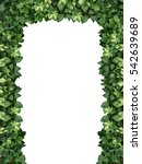 arch of climbing green plant...   Shutterstock . vector #542639689