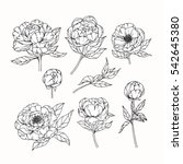 vector collection set of peony... | Shutterstock .eps vector #542645380