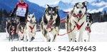 musher hiding behind sleigh at... | Shutterstock . vector #542649643