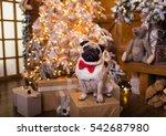 pug dog sitting on gift box... | Shutterstock . vector #542687980