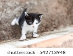 Stock photo curious kitten trying to climb wall 542713948