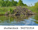 sticks of a european beaver ... | Shutterstock . vector #542721514