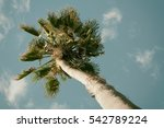 palm tree in san francisco | Shutterstock . vector #542789224
