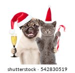 Stock photo puppy and kitten in red santa hats holding glass of champagne and candy cane isolated on white 542830519