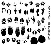 amphibian,animal,background,bear,bird,black,cat,cheetah,claw,deer,dog,duck,elephant,foot,footprint