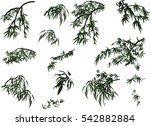 illustration with bamboo... | Shutterstock .eps vector #542882884