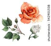Wildflower Rose Flower In A...