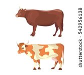 Different Cows  Isolated Vecto...