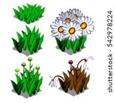 Life Stages Of Leucanthemum...