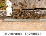 plenty of bees at the entrance... | Shutterstock . vector #542988514