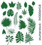 set of different leafs vector...   Shutterstock .eps vector #543006418