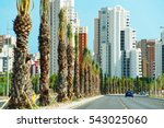 Road At Palm Grove In Elche...