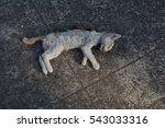 Wreck White Cat
