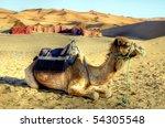 dromedary camel in the desert - stock photo