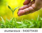 farmer hand giving water to... | Shutterstock . vector #543075430