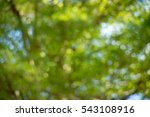 green natural background of out ... | Shutterstock . vector #543108916