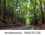 the bohol man made is a... | Shutterstock . vector #543151720