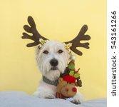 dog as deer  jack russell... | Shutterstock . vector #543161266