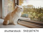 cat looking out the window | Shutterstock . vector #543187474