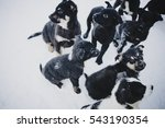 large  group of puppies taken... | Shutterstock . vector #543190354