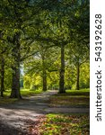 tree lined path through st.... | Shutterstock . vector #543192628