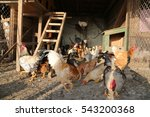 flock of hens and roosters... | Shutterstock . vector #543200368