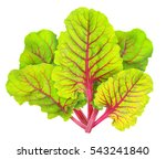 isolated chard. fresh leaves of ... | Shutterstock . vector #543241840