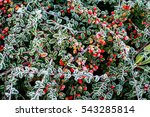autumn winter leaves covered in ... | Shutterstock . vector #543285814