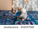 Stock photo kitten playing with toy 543297040
