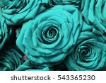 arrangement of aqua blooming... | Shutterstock . vector #543365230