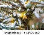 Christmas Winter Green Tree