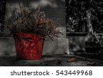 Dead Flower In Red Pot In P  R...
