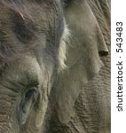Abstract Close-Up of Indian Elephant - stock photo