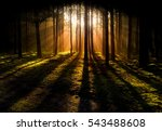 mystery forest | Shutterstock . vector #543488608