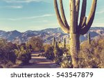 saguaro national park | Shutterstock . vector #543547879