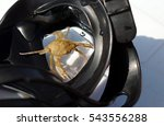the crab sits in a mask for... | Shutterstock . vector #543556288