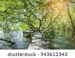 Path In Mangrove Forest In...