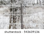 Barbed Wire Fence Covered Snow