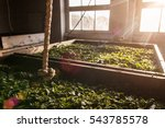 view inside a factory where tea ... | Shutterstock . vector #543785578