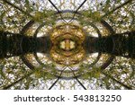 abstract pattern of trees... | Shutterstock . vector #543813250