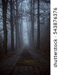 the dark road through the forest | Shutterstock . vector #543876376