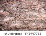 Background Of Pine Bark